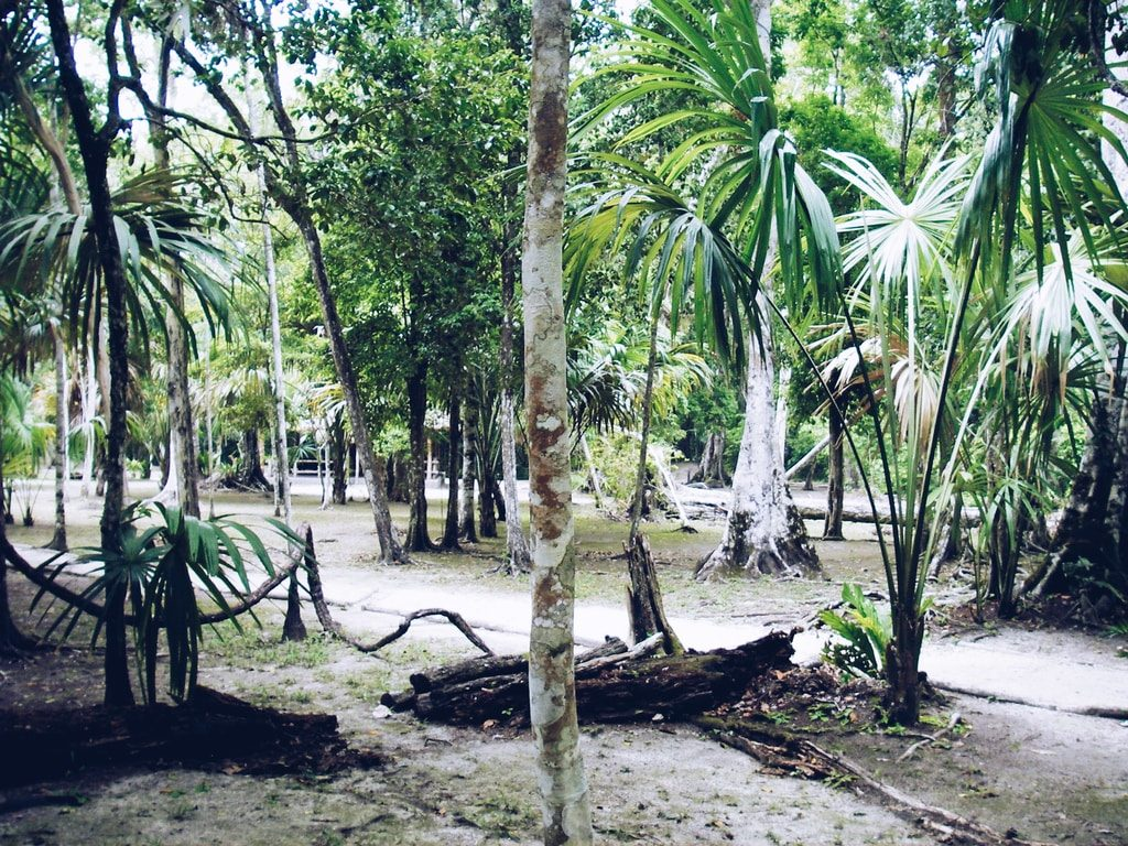 Tikal - Guatemala - nature