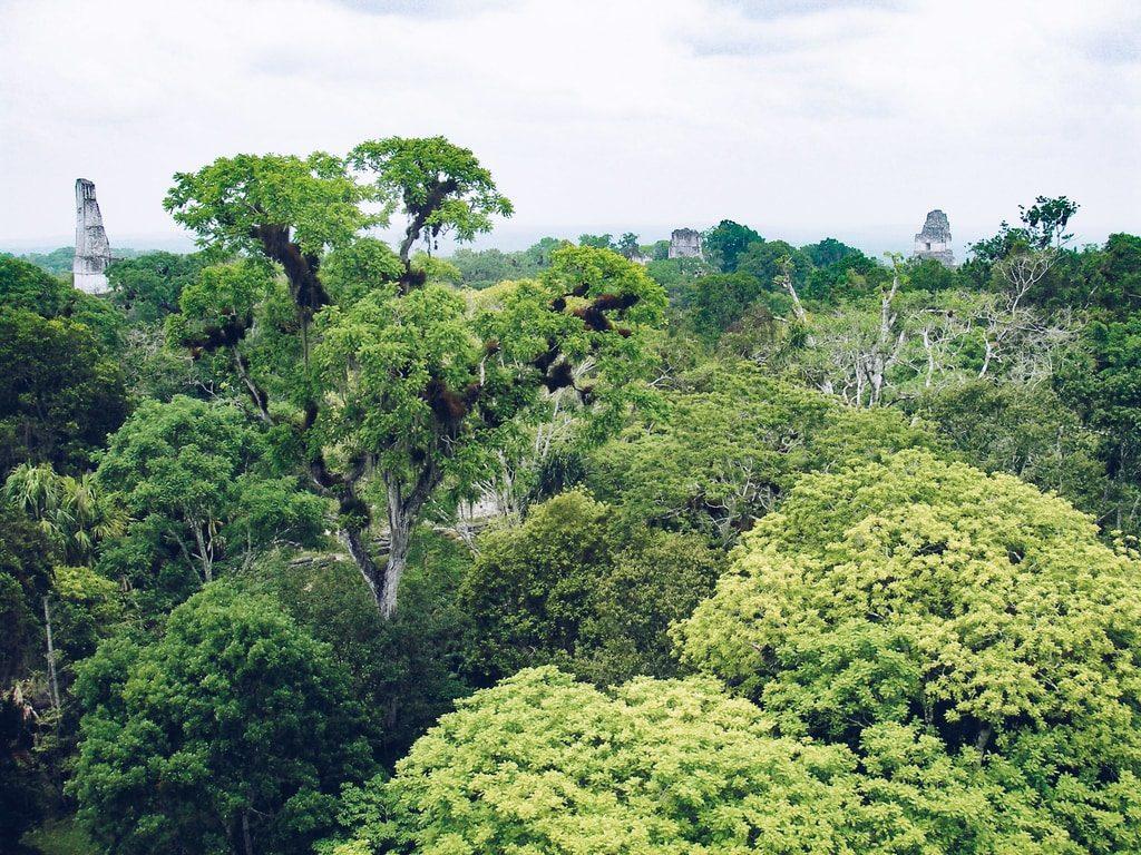 Tikal - Guatemala - vue sur la forêt