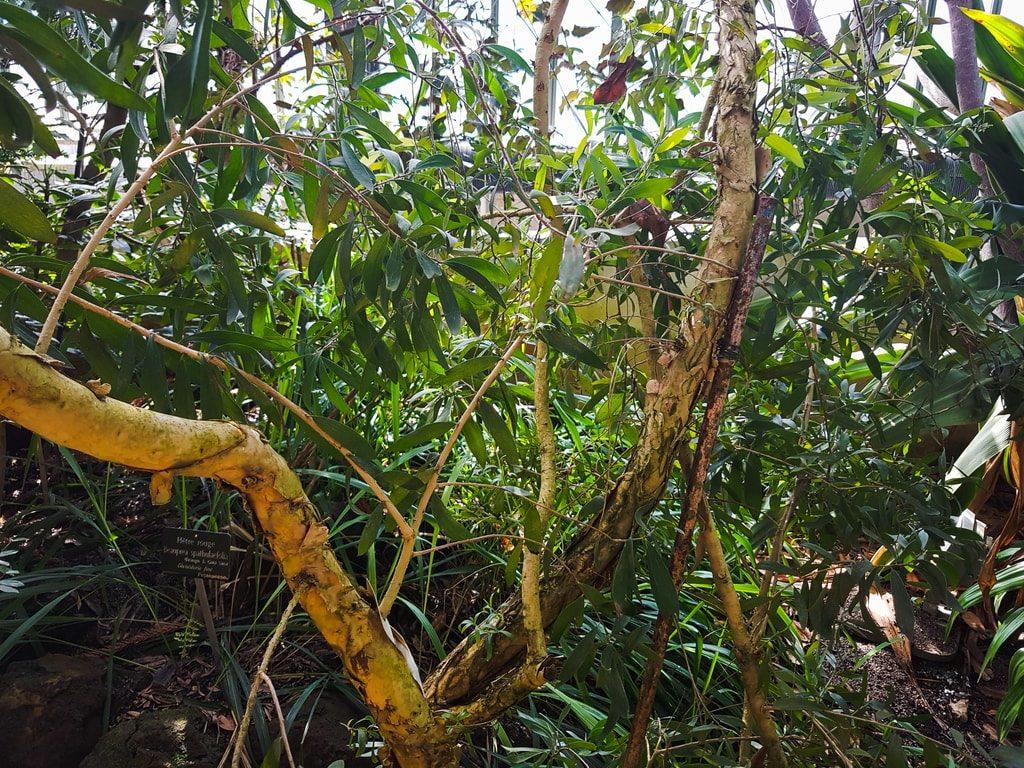 Grandes serres du jardin des plantes - serre Nouvelle-Calédonie 2