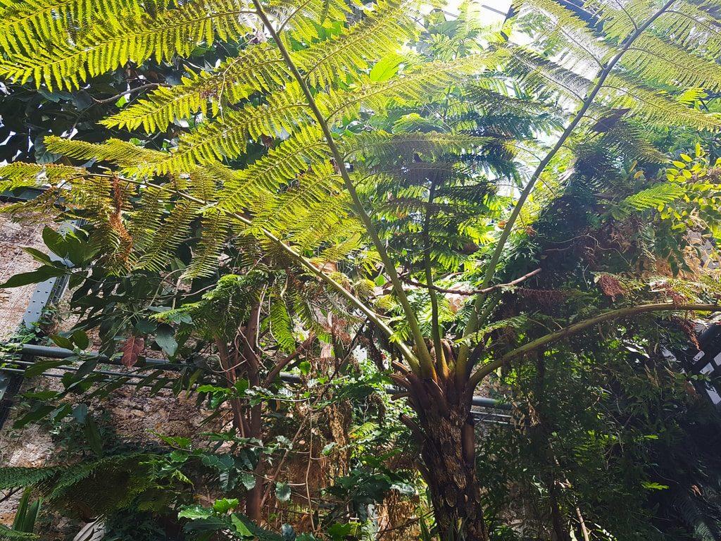 Grandes serres du jardin des plantes - serre Nouvelle-Calédonie 3