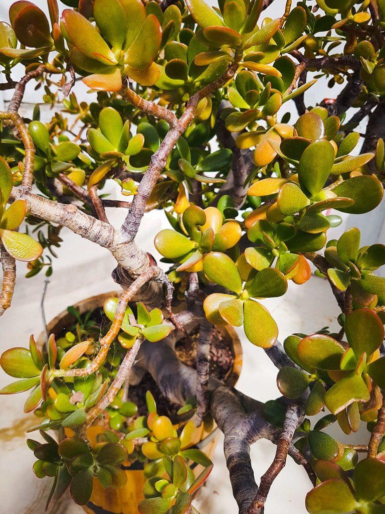 Grandes serres du jardin des plantes - serre aride 3