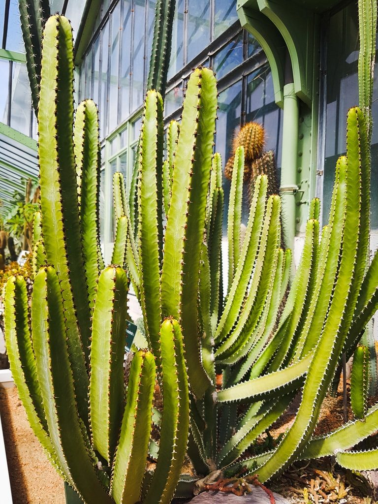 Grandes serres du jardin des plantes - serre aride 4