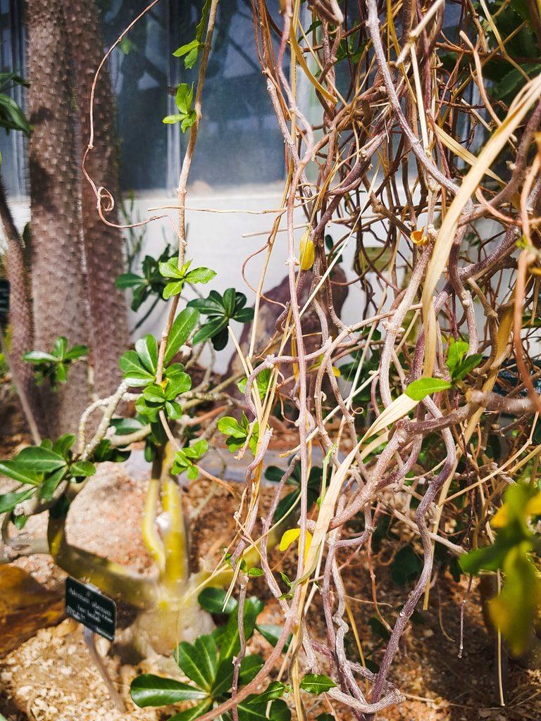 Grandes serres du jardin des plantes - serre aride 5