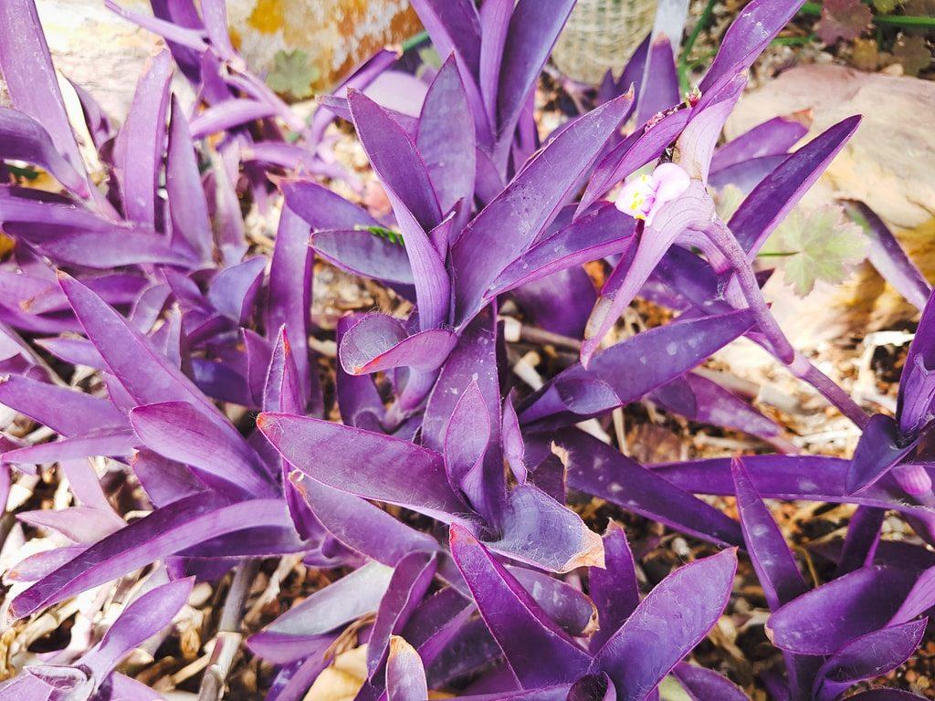 Grandes serres du jardin des plantes - serre aride 8
