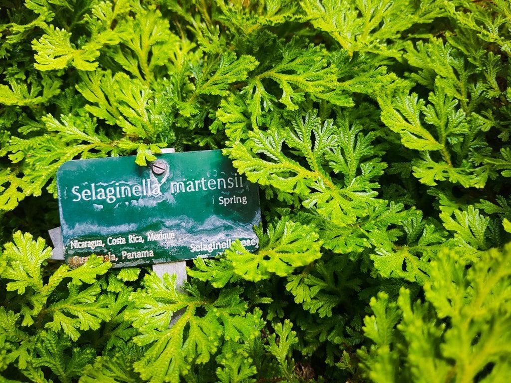 Grandes serres du jardin des plantes - serre histoire 10