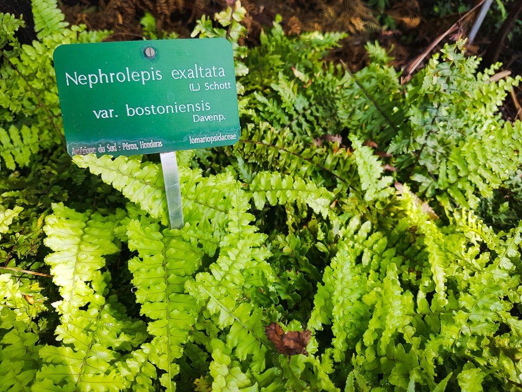 Grandes serres du jardin des plantes - serre histoire 4