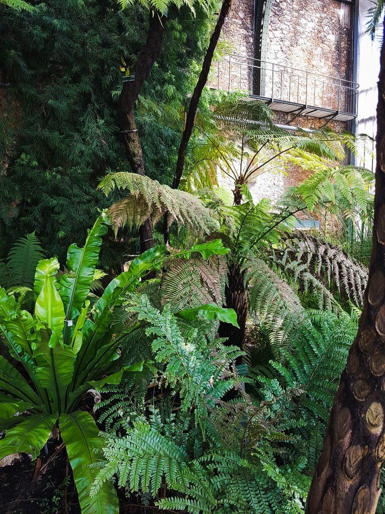 Grandes-serres-du-jardin-des-plantes-serre-histoire-5