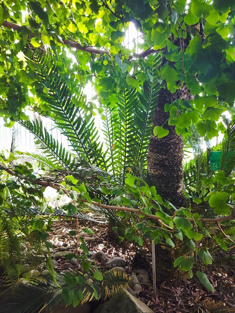Grandes serres du jardin des plantes - serre histoire 7