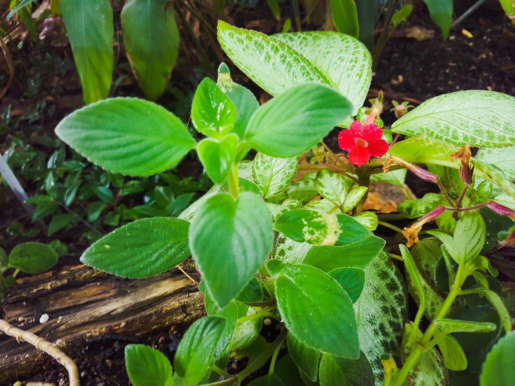 Grandes serres du jardin des plantes - serre tropicale 3