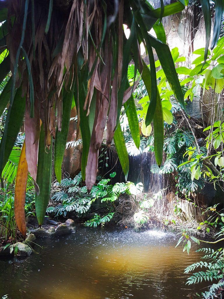 Grandes serres du jardin des plantes - serre tropicale 4