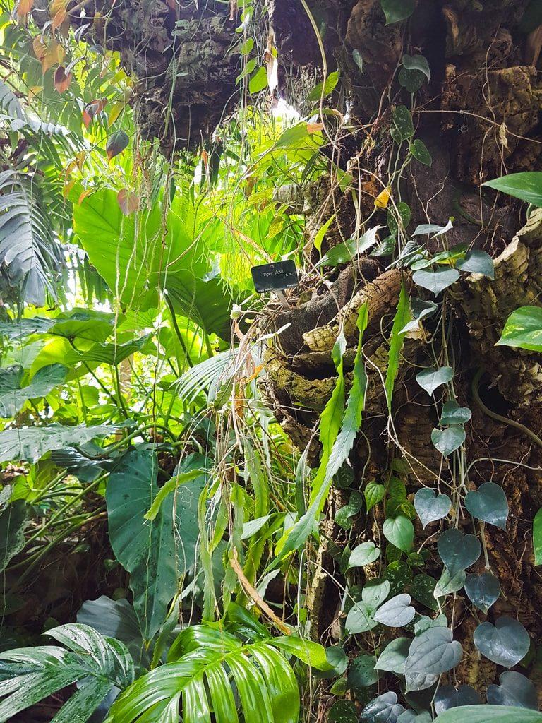 Grandes serres du jardin des plantes - serre tropicale 5