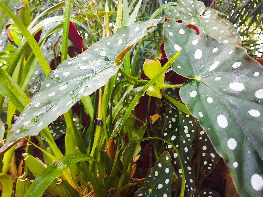 Grandes serres du jardin des plantes - serre tropicale 6