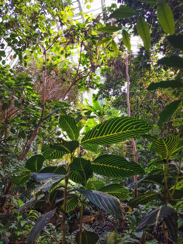Grandes-serres-du-jardin-des-plantes-serre-tropicale