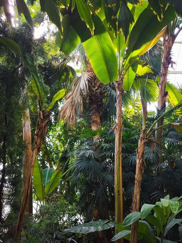 Grandes serres du jardin des plantes - serre tropicale 8