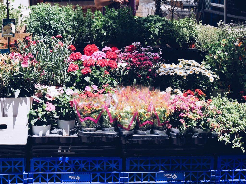 Marché central de Valence - extérieur - fleurs