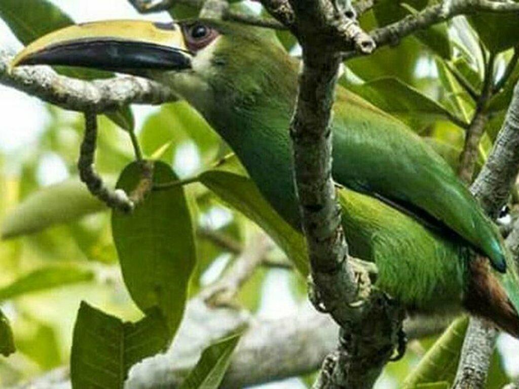 observation des oiseaux à Tikal