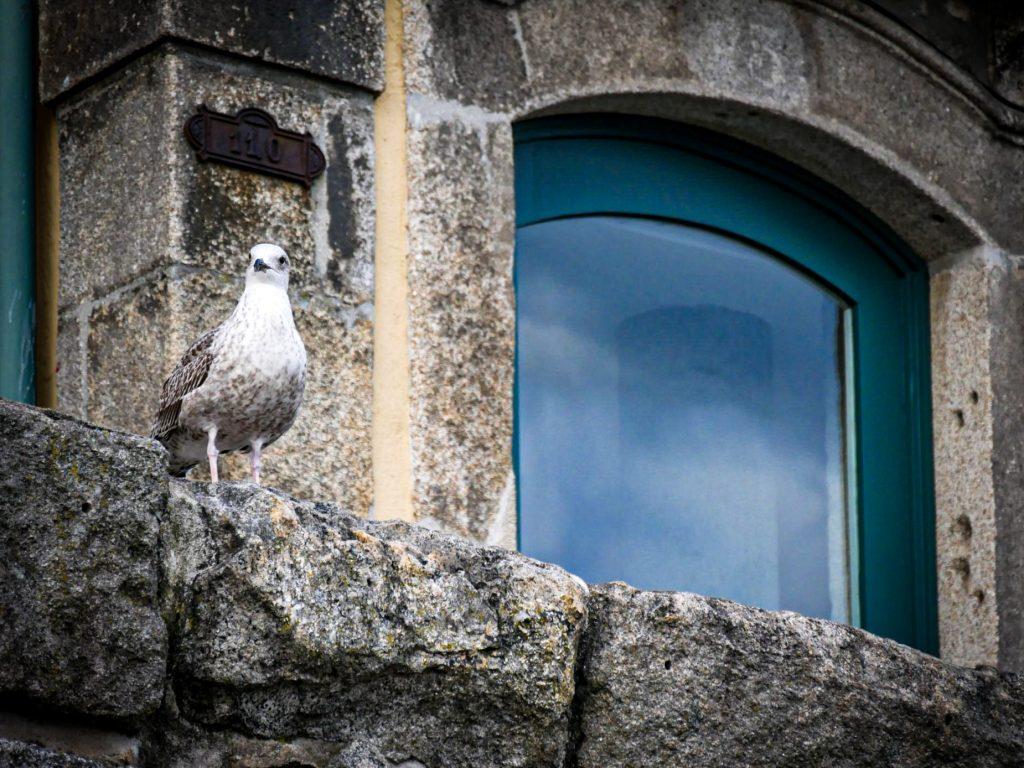 Oiseau - la Ribeira