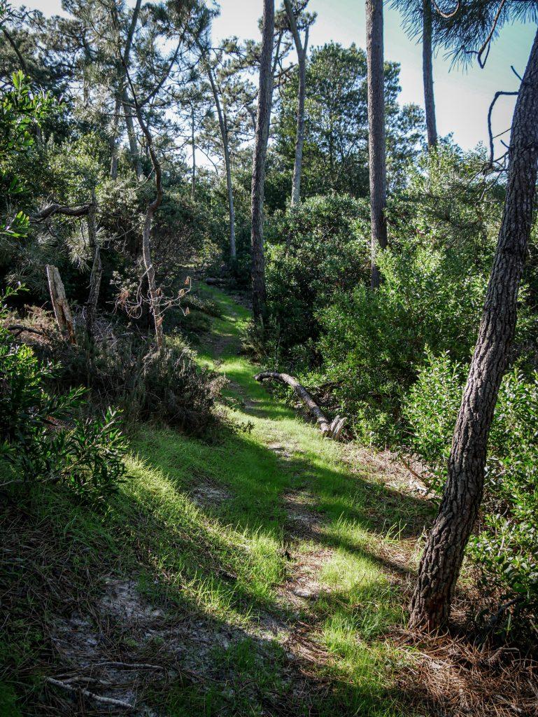 Chemin - réserve naturelle de Sao Jacinto