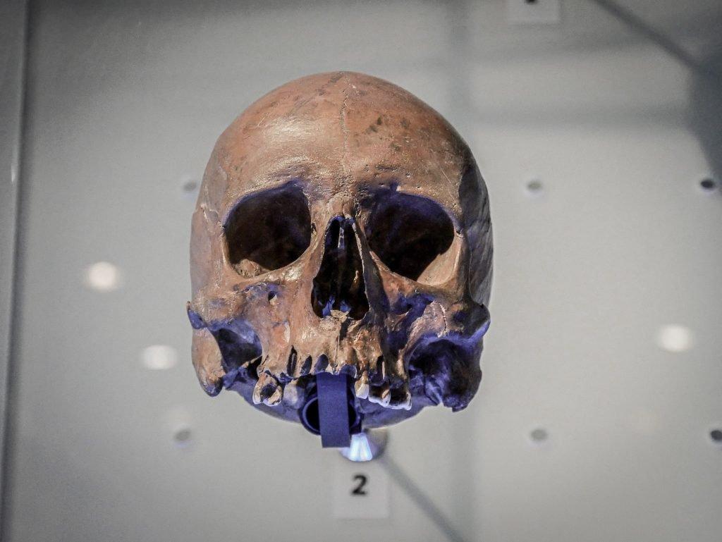 Museum of London - crâne humain