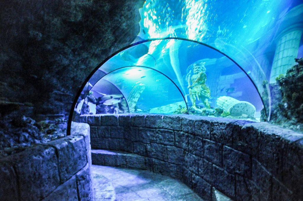 Porto en famille - aquarium sea life