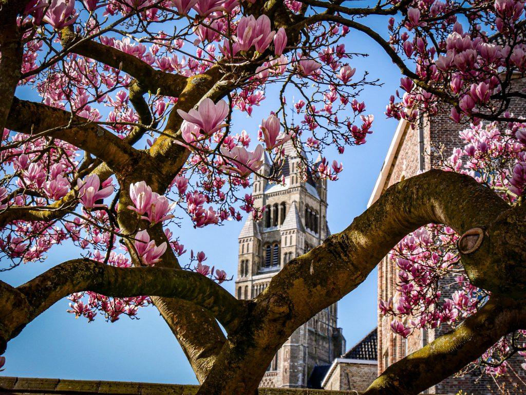 Que faire à Bruges - Église Notre-Dame