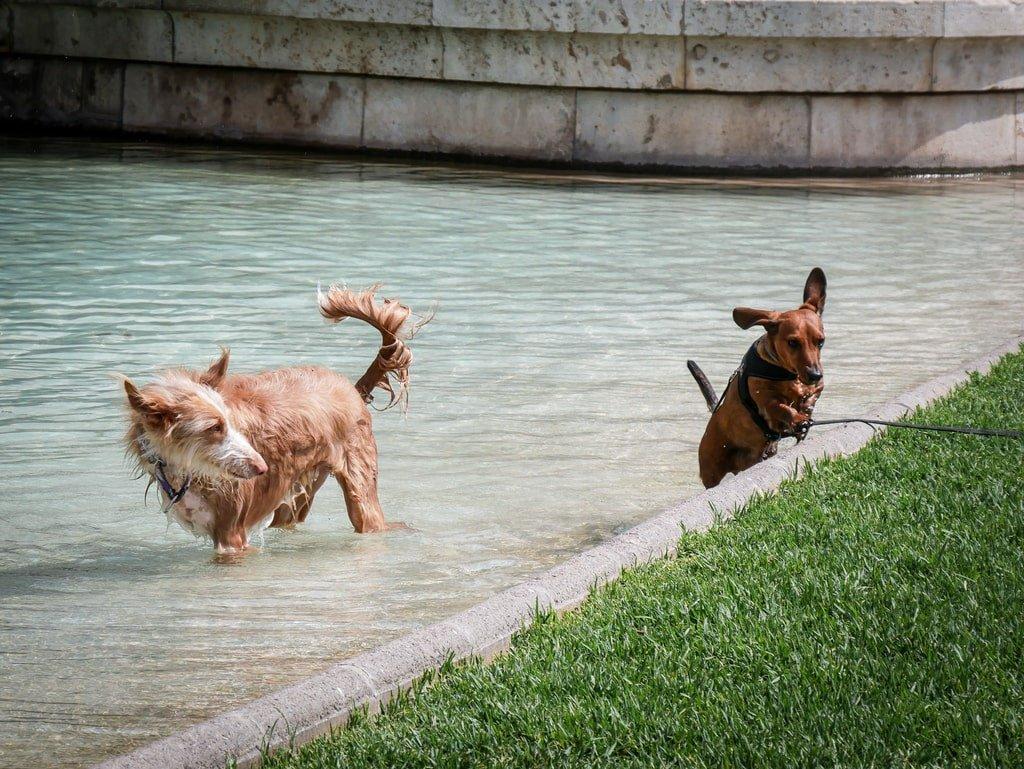 Jardins du Tùria - Valence - chiens