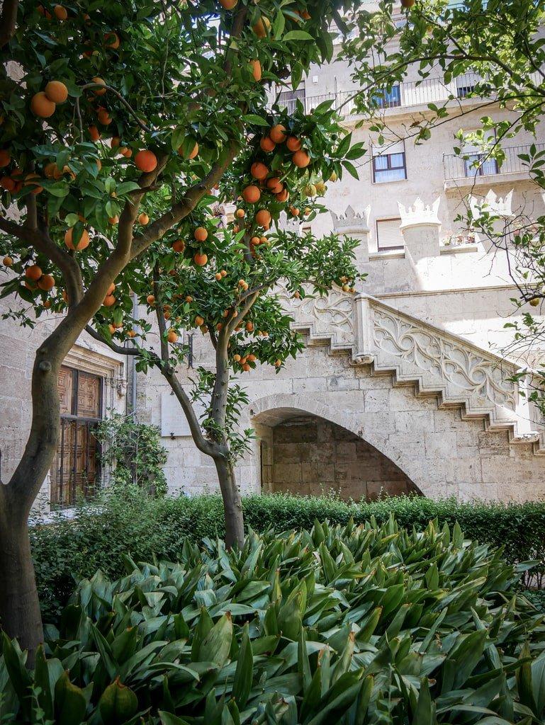 Loge de la Soie - orangers - Valence